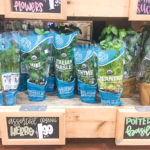 Trader Joe's Organic Potted Herb Plants