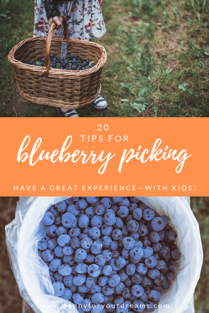20 Blueberry Picking Tips