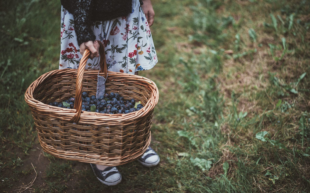 20 Blueberry Picking Tips | Have a Great Experience with Kids!