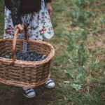 20 Blueberry Picking Tips | Have a Great Experience— With Kids!